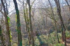 Γυμνό δάσος με τους λάμποντας κλάδους Στοκ Εικόνες