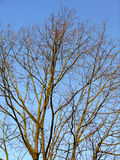 γυμνό δέντρο κλάδων Στοκ φωτογραφία με δικαίωμα ελεύθερης χρήσης
