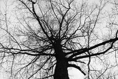 Γυμνό δέντρο κορωνών υπερυψωμένο Στοκ φωτογραφία με δικαίωμα ελεύθερης χρήσης
