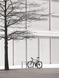 γυμνό δέντρο ποδηλάτων Στοκ Φωτογραφίες