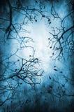 γυμνό δέντρο προτύπων Στοκ φωτογραφία με δικαίωμα ελεύθερης χρήσης