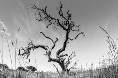 Γυμνό δέντρο στην Αυστραλία, Βόρεια Περιοχή, fisheye φακός στοκ φωτογραφίες