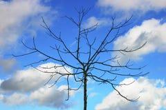 γυμνό δέντρο Στοκ Φωτογραφίες