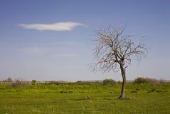 γυμνό μόνο δέντρο Στοκ Φωτογραφία