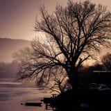 Γυμνό παλαιό δέντρο από τον ποταμό στο ηλιοβασίλεμα Στοκ εικόνα με δικαίωμα ελεύθερης χρήσης
