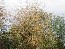 Γυμνό υπόβαθρο δέντρων κλάδων κανένα καιρικό συννεφιασμένος φθινοπώρου φύλλων Στοκ εικόνες με δικαίωμα ελεύθερης χρήσης