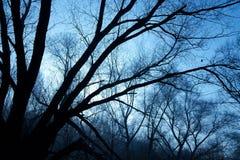 γυμνό δάσος Στοκ Εικόνες