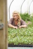 Γυναίκα αγρότης που ελέγχει τις εγκαταστάσεις στο θερμοκήπιο Στοκ εικόνες με δικαίωμα ελεύθερης χρήσης