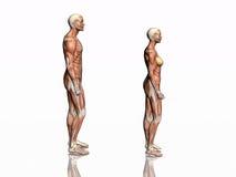 γυναίκα ανδρών ανατομίας διανυσματική απεικόνιση