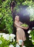 Γυναίκα με δαπάνες μιας τις μακροχρόνιες δίκαιες τρίχας με ένα καλάθι των πράσινων μήλων ενάντια σε έναν κήπο Apple-δέντρων Στοκ φωτογραφία με δικαίωμα ελεύθερης χρήσης