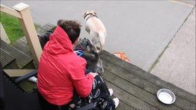 Γυναίκα με τα σκυλιά κατοικίδιων ζώων καλυβών παραλιών απόθεμα βίντεο