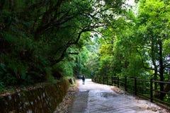 Γυναίκα με την κόκκινη τρίχα που περπατά μέσω του δάσους κατά μήκος των πράσινων δέντρων ιχνών πολύ αρκετά και στα ξύλα πραγματοπ στοκ φωτογραφία