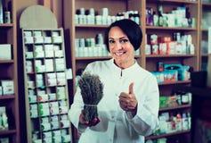 Γυναίκα με τη δέσμη των ξηρών χορταριών στο φαρμακείο στοκ φωτογραφία με δικαίωμα ελεύθερης χρήσης