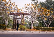 Γυναίκα με τη κάμερα που παίρνει τις εικόνες των δέντρων λουλουδιών Στοκ εικόνα με δικαίωμα ελεύθερης χρήσης