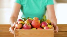 Γυναίκα με το ξύλινο κιβώτιο των ώριμων μήλων απόθεμα βίντεο