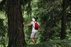 Γυναίκα με το σακίδιο πλάτης που περπατά στο δάσος στοκ φωτογραφία