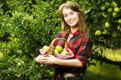 Γυναίκα με το σύνολο καλαθιών των ώριμων μήλων σε έναν κήπο Νέο χαμόγελο στοκ φωτογραφία