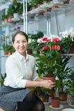 Γυναίκα με anthurium τις εγκαταστάσεις στο κατάστημα Στοκ φωτογραφίες με δικαίωμα ελεύθερης χρήσης