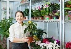 Γυναίκα με Aphelandra Στοκ φωτογραφία με δικαίωμα ελεύθερης χρήσης