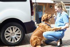 Γυναίκα με Van Running Dog την περπατώντας υπηρεσία Στοκ Φωτογραφία