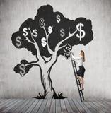 Γυναίκα που αναρριχείται στο δέντρο δολαρίων με τα γραπτά σημάδια δολαρίων Στοκ εικόνες με δικαίωμα ελεύθερης χρήσης
