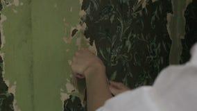 Γυναίκα που γδύνει την παλαιά ταπετσαρία απόθεμα βίντεο