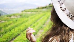 Γυναίκα που εξετάζει τον τομέα των εγκαταστάσεων αμπέλων στο λόφο φιλμ μικρού μήκους