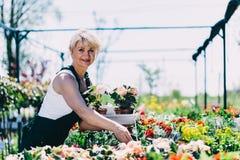 Γυναίκα που επιλέγει τα λουλούδια σε ένα καλλιεργώντας κέντρο Στοκ Φωτογραφίες