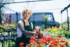Γυναίκα που εργάζεται σε ένα καλλιεργώντας κέντρο Στοκ φωτογραφίες με δικαίωμα ελεύθερης χρήσης