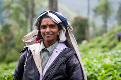 Γυναίκα που εργάζεται στις φυτείες τσαγιού στη Σρι Λάνκα Στοκ εικόνες με δικαίωμα ελεύθερης χρήσης