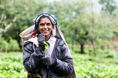 Γυναίκα που εργάζεται στις φυτείες τσαγιού στη Σρι Λάνκα Στοκ φωτογραφίες με δικαίωμα ελεύθερης χρήσης