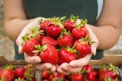 Γυναίκα που κρατά μια juicy δαγκωμένη φράουλα στη κάμερα, strawber Στοκ Φωτογραφίες