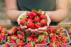 Γυναίκα που κρατά μια juicy δαγκωμένη φράουλα στη κάμερα, strawber Στοκ Εικόνα