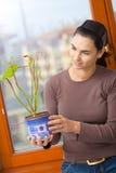 Γυναίκα που κρατά το σε δοχείο φυτό Στοκ φωτογραφία με δικαίωμα ελεύθερης χρήσης
