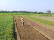Γυναίκα που μαζεύει με τη τσουγκράνα προετοιμάζοντας το χώμα στα φυτικά ξημερώματα τομέων σε Hoi ένα Βιετνάμ Στοκ Φωτογραφία
