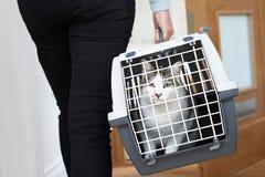 Γυναίκα που παίρνει τη γάτα της Pet που εξετάζει στο μεταφορέα στοκ φωτογραφία με δικαίωμα ελεύθερης χρήσης