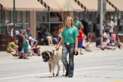 Γυναίκα που περπατά ένα μεγάλο σκυλί για 4H σε μια παρέλαση στη μικρού χωριού Αμερική Στοκ Φωτογραφίες