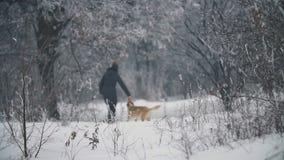 Γυναίκα που περπατά με ένα σκυλί απόθεμα βίντεο