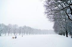 Γυναίκα που περπατά με ένα σκυλί σε μια κρύα ημέρα κατά τη διάρκεια μιας πτώσης χιονιού στο πάρκο Vigeland, Όσλο Στοκ Εικόνες