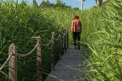 Γυναίκα που περπατά σε έναν κήπο στοκ εικόνες