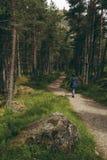 Γυναίκα που περπατά σε ένα ίχνος σε μια δασώδη περιοχή πεύκων Στοκ εικόνα με δικαίωμα ελεύθερης χρήσης