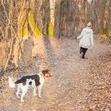 Γυναίκα που περπατά την μικτό αναπαραγμένο σκυλί Στοκ Εικόνες