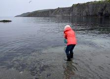 Γυναίκα που πιάνει τα ψάρια Caplin με ένα δίχτυ στοκ φωτογραφίες