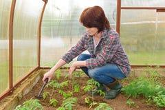 Γυναίκα που φυτεύει τα νέα σπορόφυτα Στοκ Εικόνες