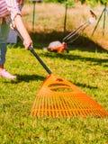 Γυναίκα που χρησιμοποιεί την τσουγκράνα για να καθαρίσει επάνω το χορτοτάπητα κήπων Στοκ Εικόνες