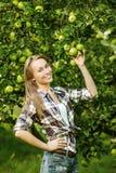 Γυναίκα σε έναν κήπο δέντρων μηλιάς κατά τη διάρκεια της εποχής συγκομιδών Το νέο s στοκ εικόνες