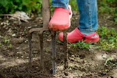 Γυναίκα στα τζιν και τα λαστιχένια παπούτσια που σκάβουν το έδαφος Στοκ Φωτογραφία