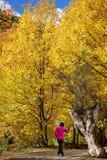 Γυναίκα στη φωτεινή ρόδινη τοποθέτηση σακακιών μπροστά από τον κορμό δέντρων μεταξύ των φύλλων φθινοπώρου Στοκ Εικόνες