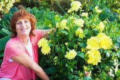 Γυναίκα στις προσοχές κήπων για τα λουλούδια Στοκ φωτογραφίες με δικαίωμα ελεύθερης χρήσης