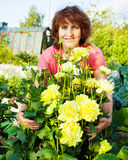 Γυναίκα στις προσοχές κήπων για τα λουλούδια Στοκ εικόνα με δικαίωμα ελεύθερης χρήσης